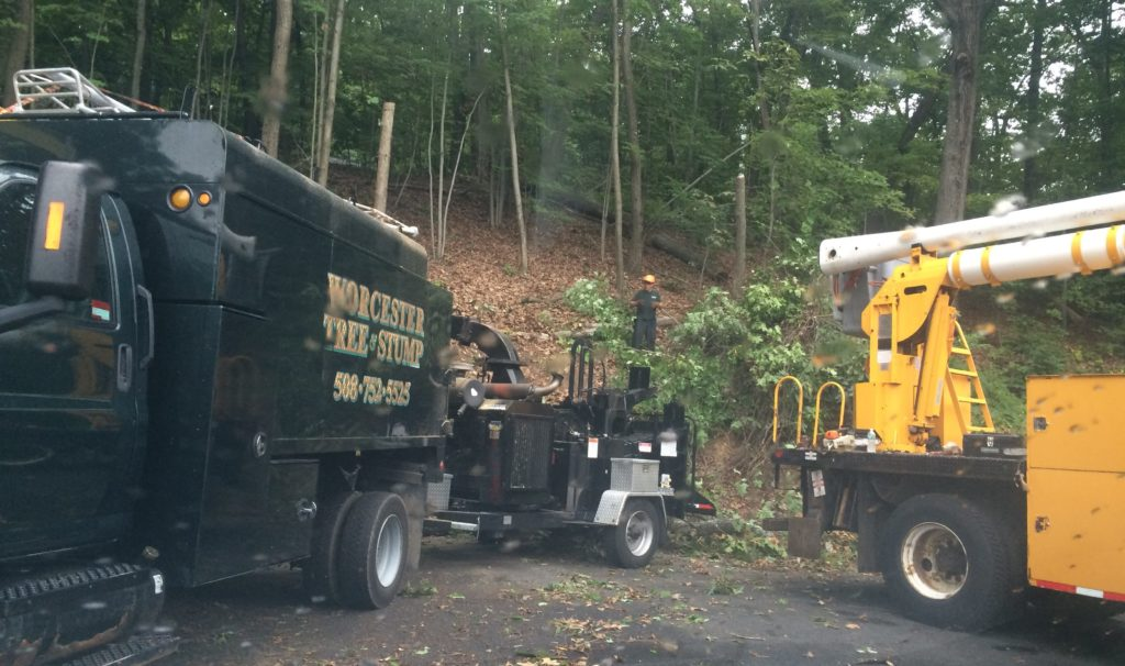 Tree Removal Service by Worcester Tree & Stump